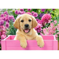 puppy in pink box